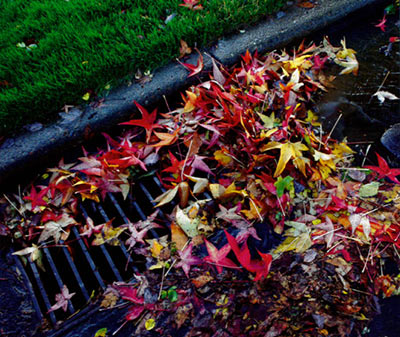 Leaves clogging storm drains