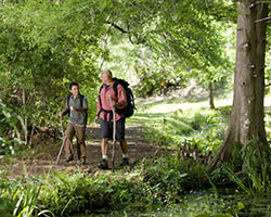 Two hikers enjoy a scenic forest trail.