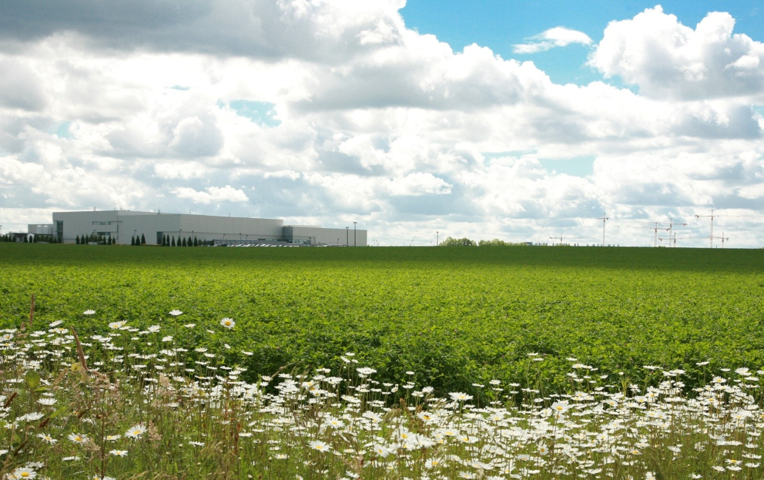 Vacant Land Image with Flowers