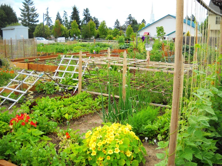 Garden Plot with trellis'