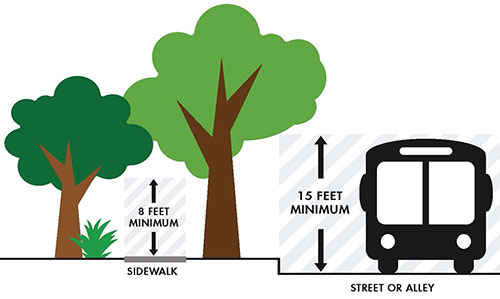 A diagram of the clear zones required for sidewalks and streets or alleys. Trees must be trimmed to a minimum of 8 feet above sidewalks, and, as of January 1, 2020, must be trimmed to a minimum of 15 feet above streets or alleys.