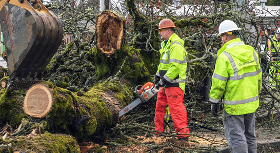 Public Works employees cutting up a fallen tree