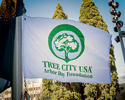 Tree-City-USA-Flag