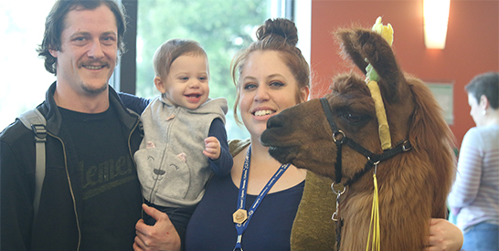 Picture of Rojo the Llama with a family of three