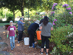 Volunteers work to clean up flower bushes at Orenco Woods Nature Park