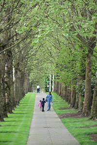 A family walks down a sidewalk surrounded by tall trees and lush green grass