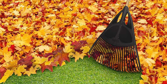 A rake clears a piles of leaves