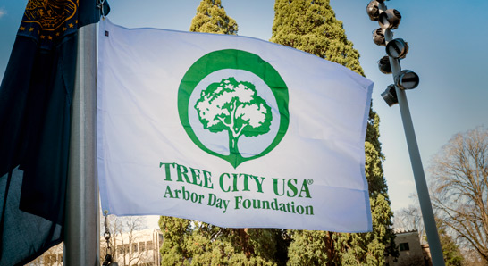 Hillsboro Earns Tree City USA Recognition Again