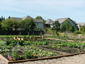 Image of Orenco Community Garden