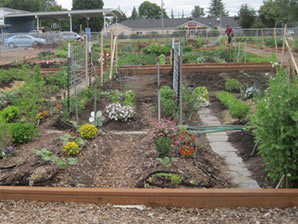 Image of David Hill Community Garden