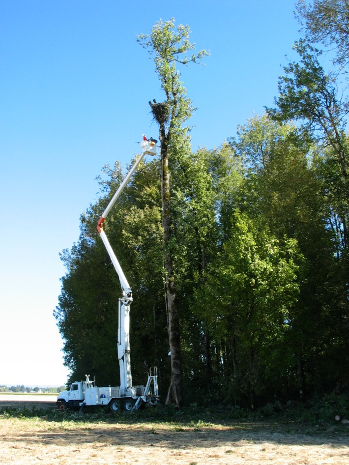 PGE Crew Removing Eagle Nest from Fern Hill