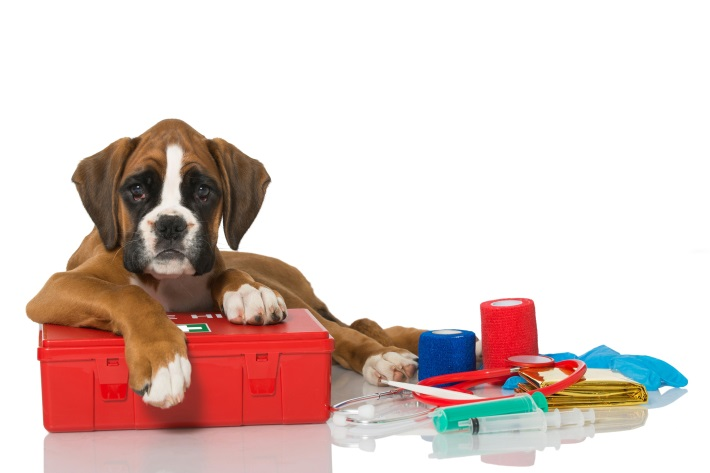 Photo of puppy with first aid kit