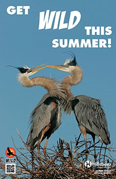 "WILD Poster with text ""Get WILD this summer!"" and a photo of two blue herons."