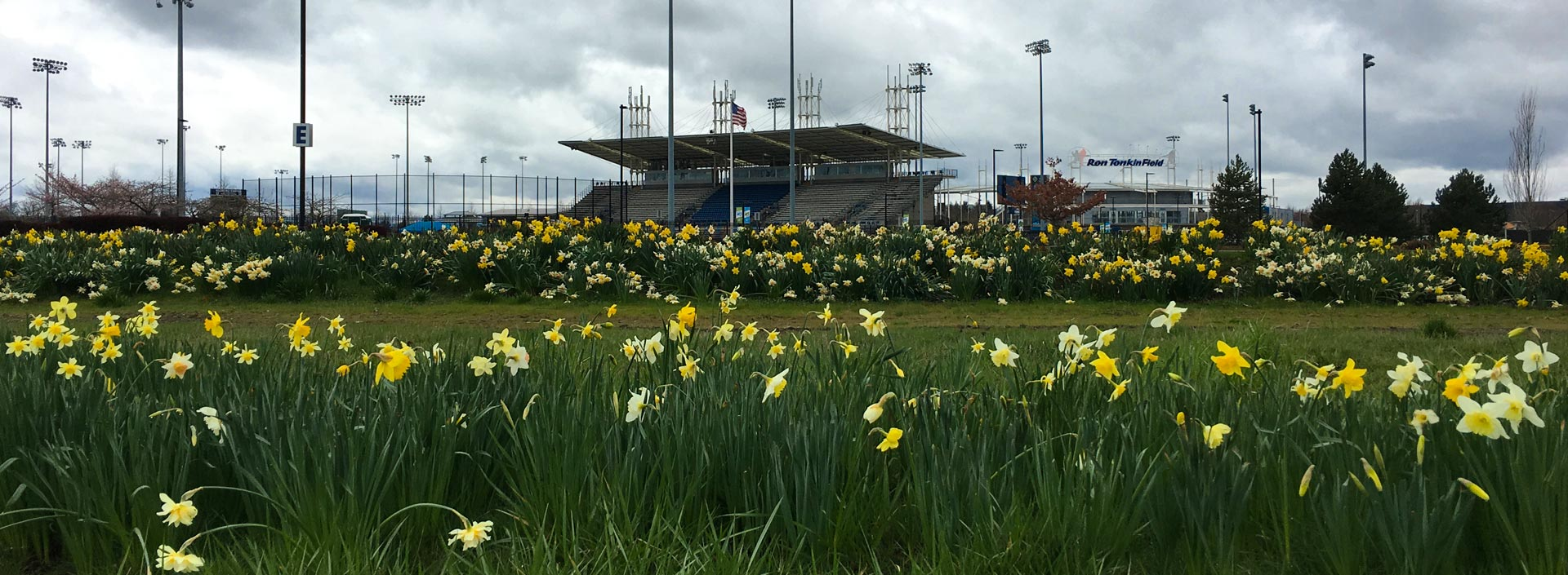 Spring flowers blooming in Hillsboro