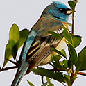 Photo of Bird on a Branch.